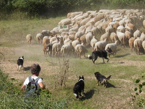 Els en Collie in Frankrijk 01