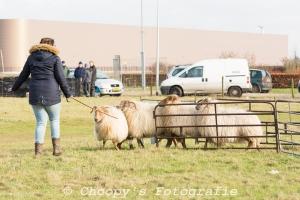 Beginners Trial Zwolle-11