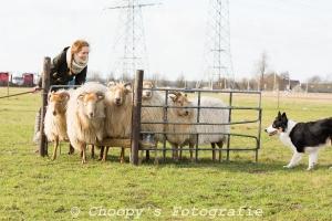 Beginners Trial Zwolle-21