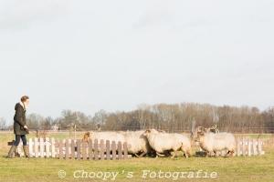 Beginners Trial Zwolle-22