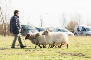 Beginners Trial Zwolle-29