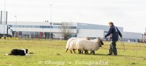 Beginners Trial Zwolle-4