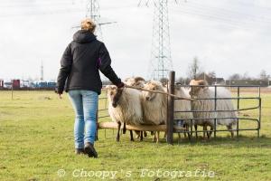 Beginners Trial Zwolle-44