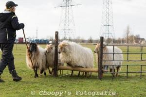 Beginners Trial Zwolle-50